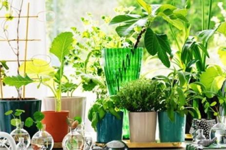 Rośliny we wnętrzach -  latem rządzi trend organiczny!