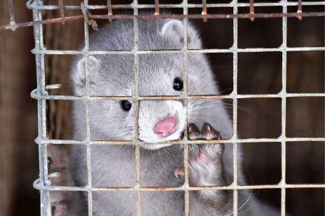 Rzęsy z norek wycofane z Sephory. Firma ugina się pod naciskami PETA i klientów