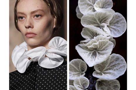 Ten Instagram powinni zobaczyć wszyscy fani mody oraz... natury. Pokazuje, jak biologia inspiruje świat high fashion