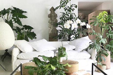 Najmodniejsze rośliny do wnętrz, które uczynią z twojego mieszkania stylowy apartament [Trendy 2020]