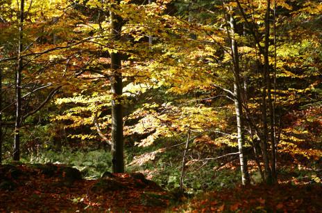 Bukowe lasy w Bieszczadach na Liście Światowego Dziedzictwa UNESCO