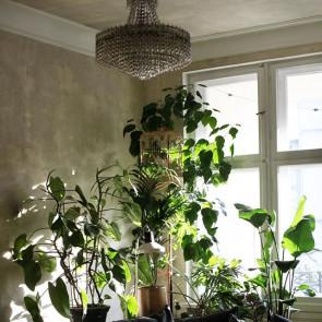 Kwiaty Doniczkowe Kwitnace 8 Latwych W Pielegnacji Roslin Do Domu Elle Decoration