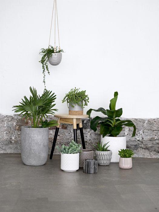 7 Roślin Doniczkowych Które Warto Mieć W Domu Elle Decoration