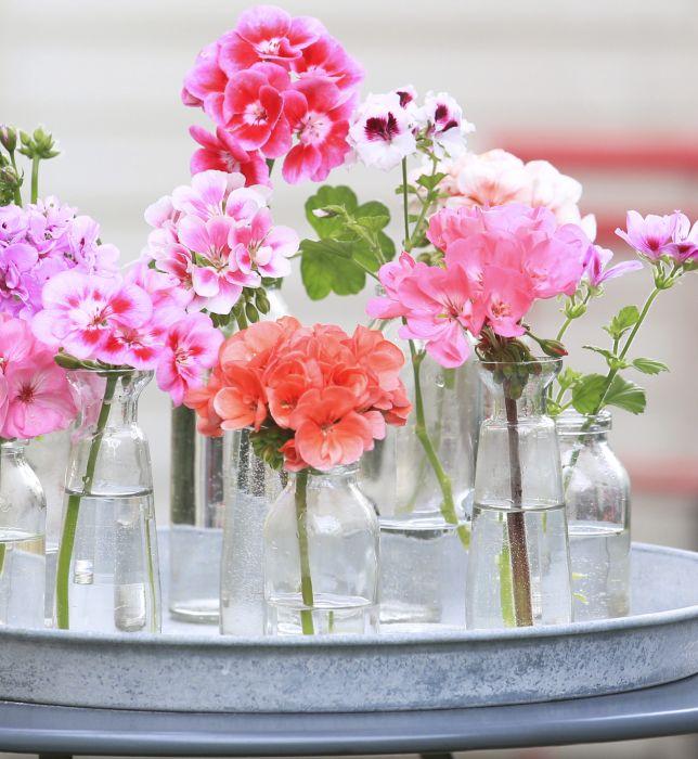 Pelargonie Kwiaty Nie Tylko Na Balkon Elle Decoration