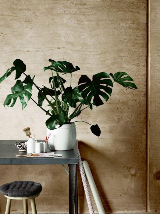 10 Najmodniejszych Roślin Doniczkowych Elle Decoration Trendy