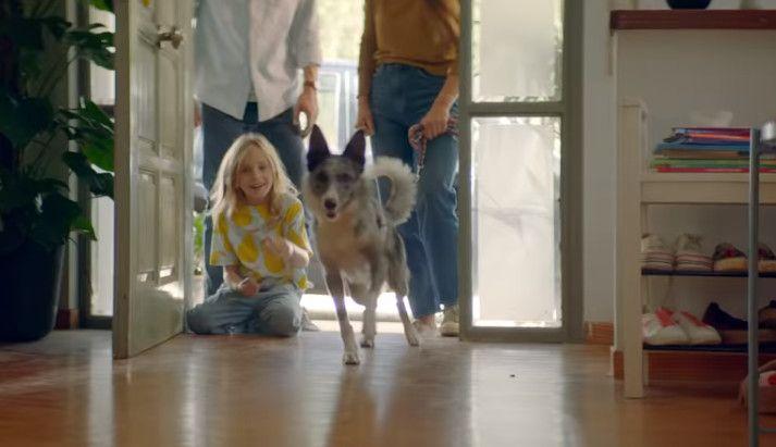 Wzruszająca Reklama O Psiej Miłości Od Ikea Elle